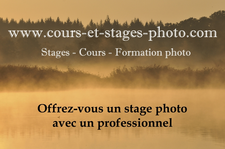 cours-stage-photo-st-etienne-42-1
